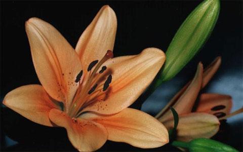 Что означают лилии в подарок 32