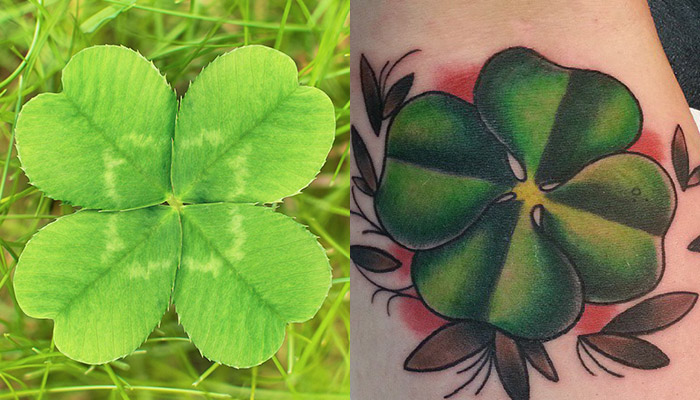 how to plant clover