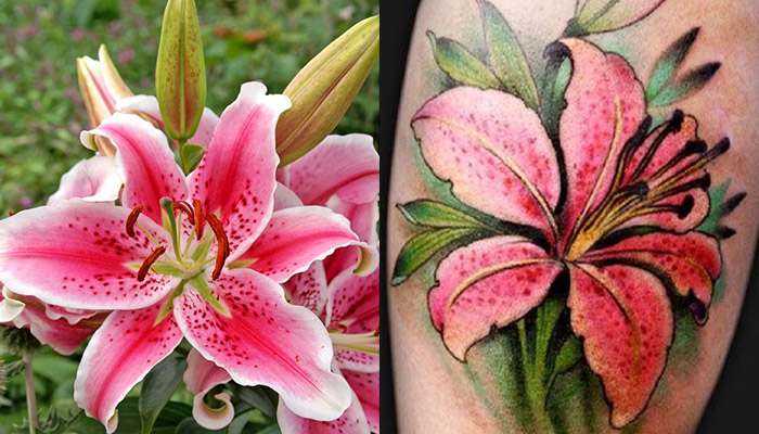 75 Best Lily Flower Tattoo Designs Meaning And Ideas For
